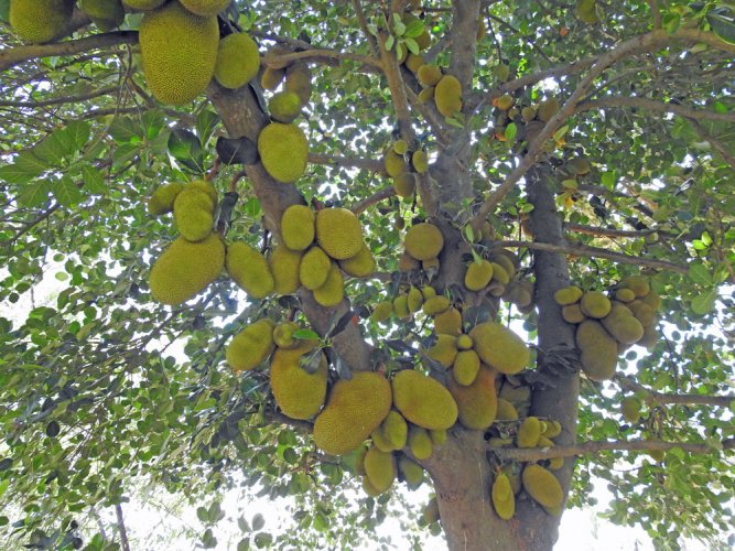Big fruit, bigger prospects