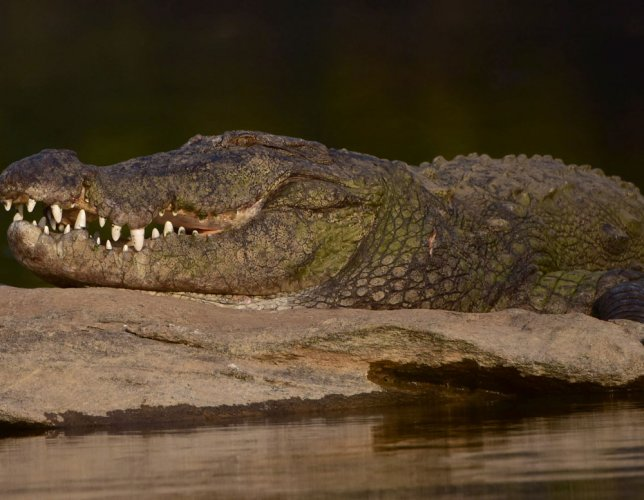 Six-year-old girl confronts crocodile to save schoolmate
