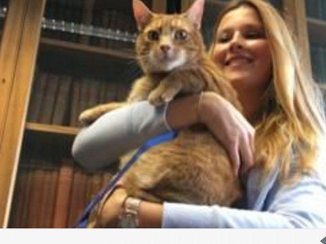 3-legged cat relieves students' stress at Cambridge University