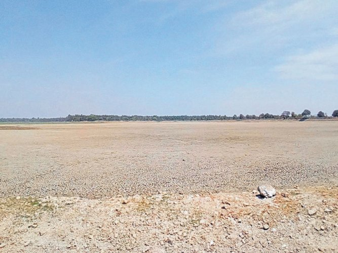 Failure of monsoon hits 2nd largest lake in Maddur, goes dry