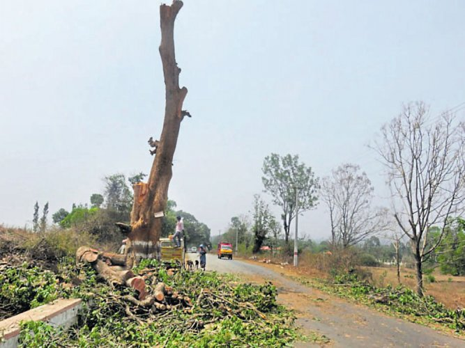 40 trees felled for road widening in C'magaluru