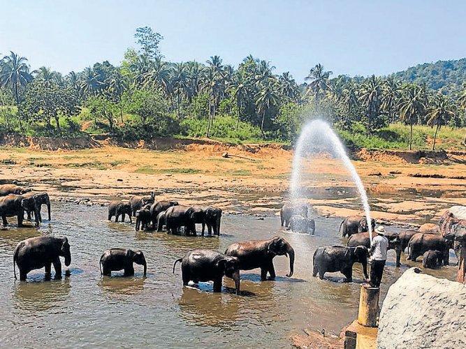 On a sojourn to Sri Lanka