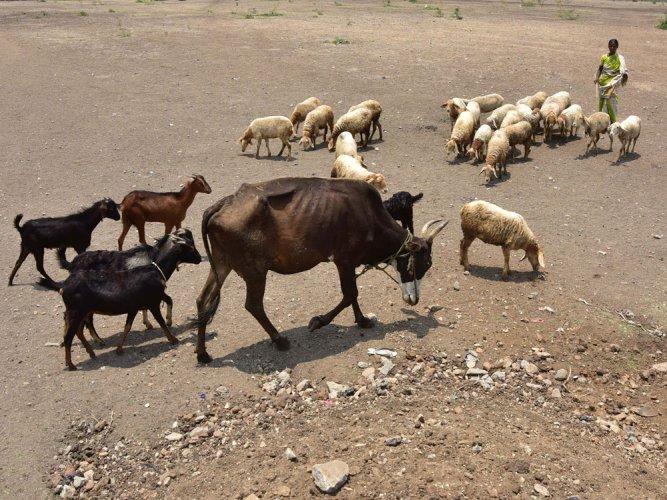 Amid drought, legislators set a multi-state tour