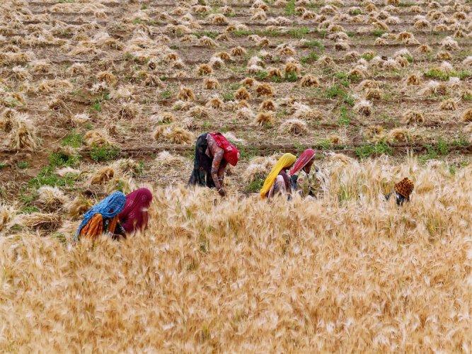 Punjab farmers stop paying loans