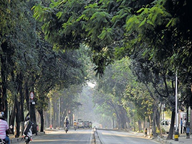 Take part in neighbourhood tree survey, save greenery
