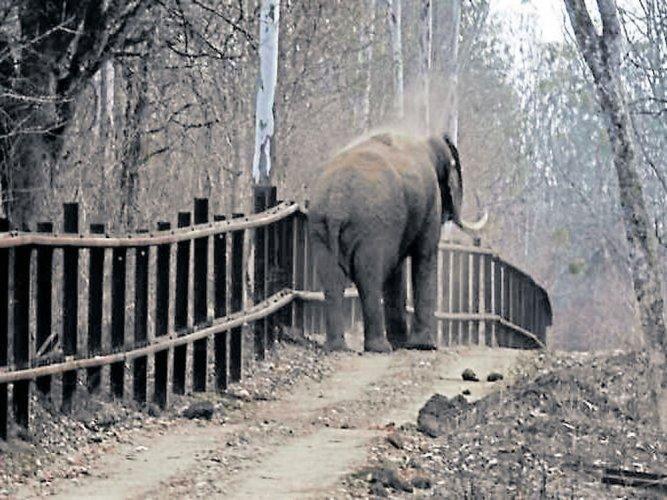Railings to be raised as jumbo jumps fence