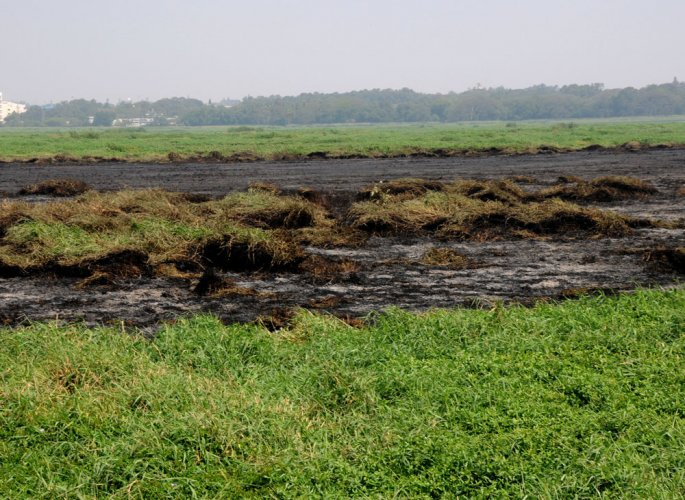 KLCDA plans to implement wetlands model to revive polluted lake