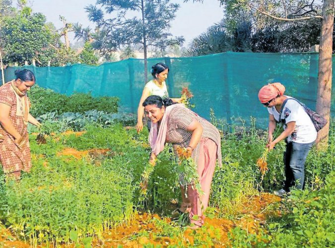 Bengalureans turn urban farmers to reconnect with nature