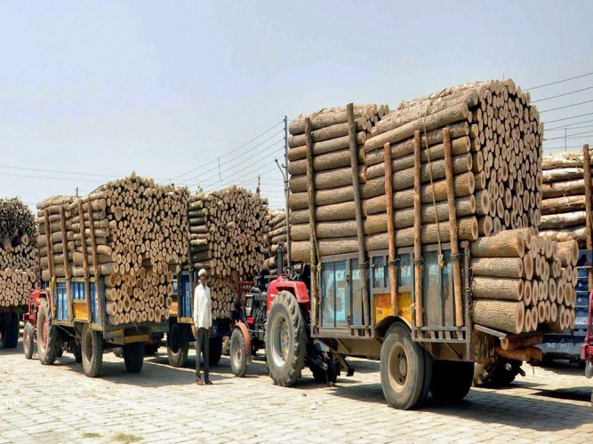 Forest dept plans e-auction of timber from October