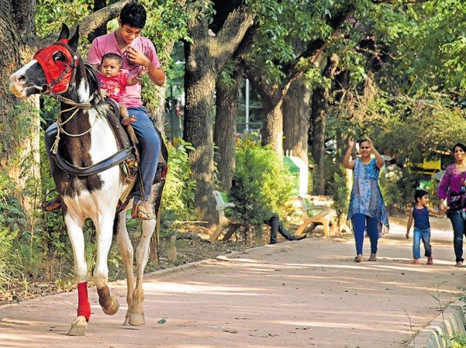 Unauthorised horse rides pose risk to Cubbon Park visitors