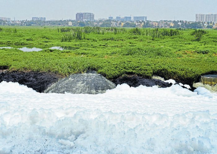 Corporate firms offer to chip in for cleaning Bellandur, Varthur lakes