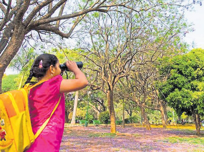 Explore the city's green wealth, soak in nature with the weekly tree walks