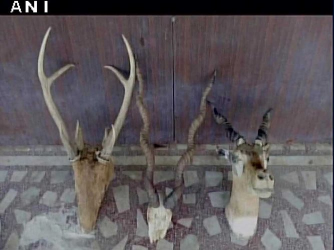 Animal skins, 40 guns recovered from national level shooter's residence