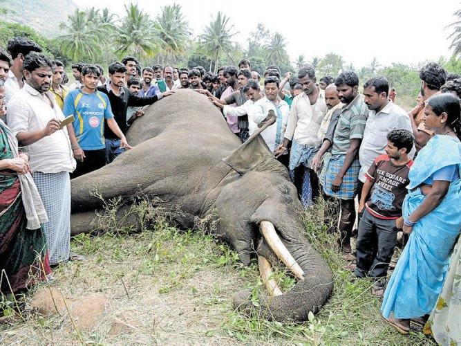 Rise in elephant deaths concerns Forest officials