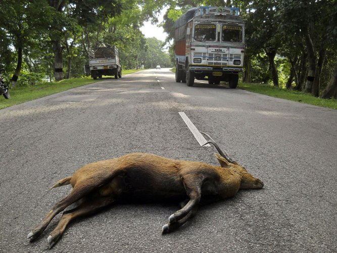 Over-speeding vehicles in Kaziranga National Park to pay Rs 5K more