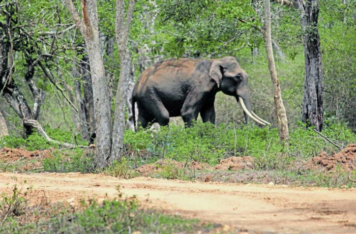 'Elephant census about numbers, habitat data'