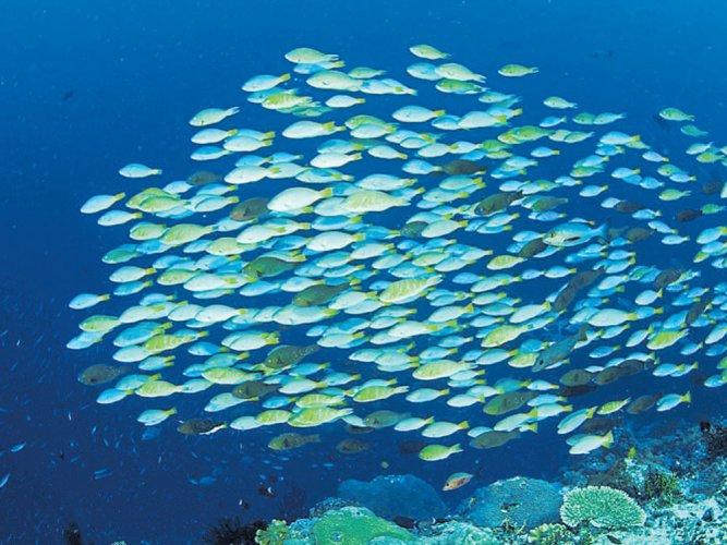 Acidified ocean water along US coast threatens marine life