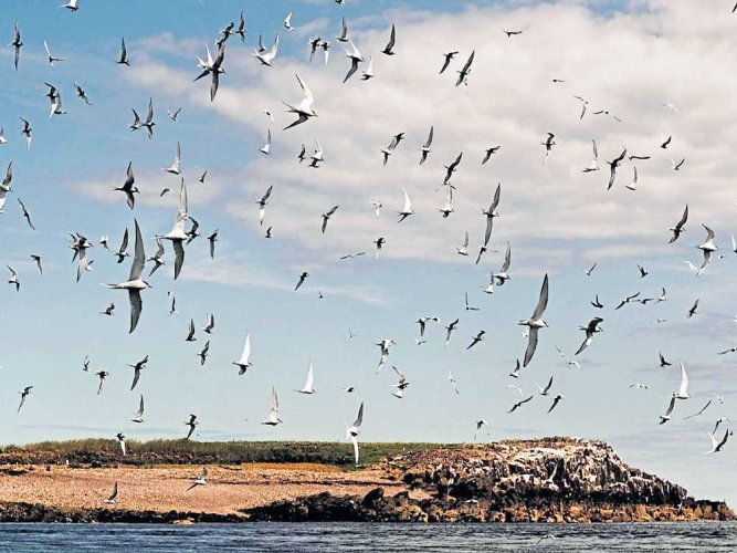 The importance of stopover habitats