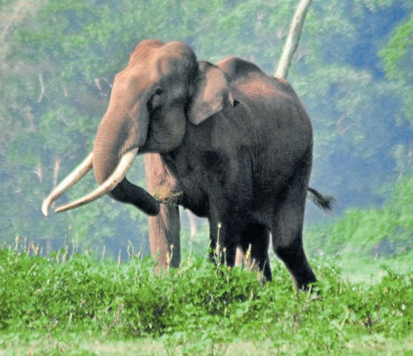 Man injured while trying to take selfie with wild elephant