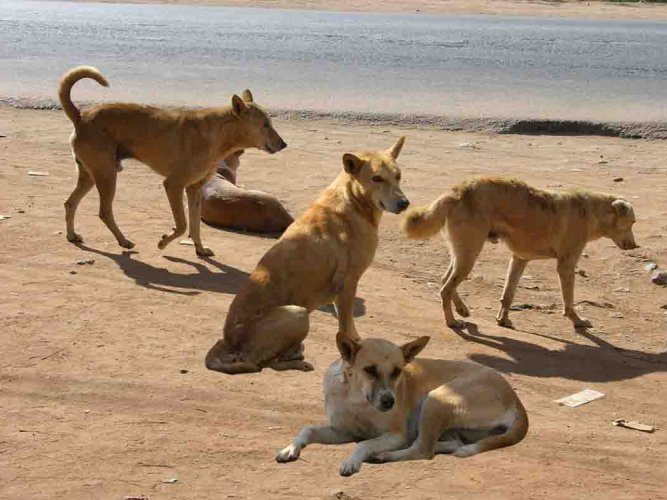 Sanitation worker mauled to death by stray dogs in UP