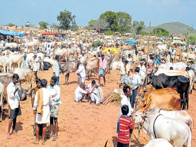 Ban on cattle trade for slaughter to regulate: Govt to SC