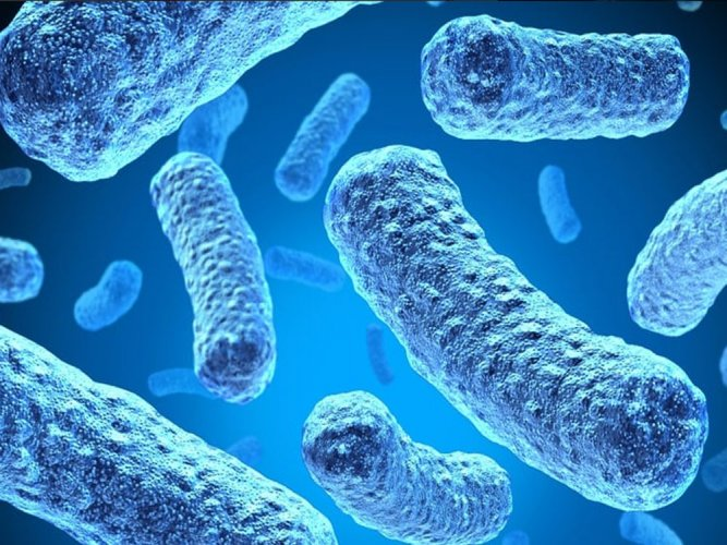 Gut bacteria may help slow down ageing process: study