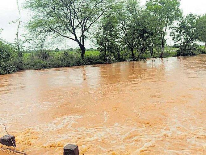 Showers continue in North K'taka;  Almatti dam starts getting inflow