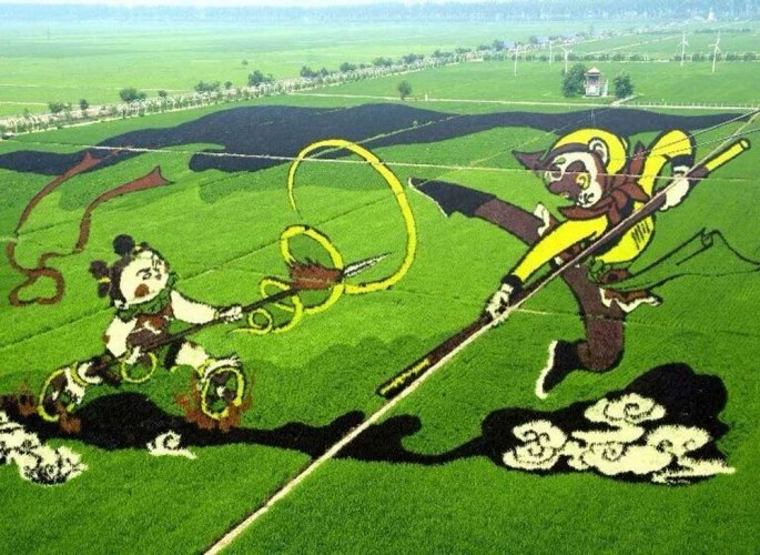 Chinese copy Japanese to make paddy fields into art; Is it possible in India?