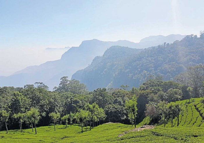 An escape to Coonoor