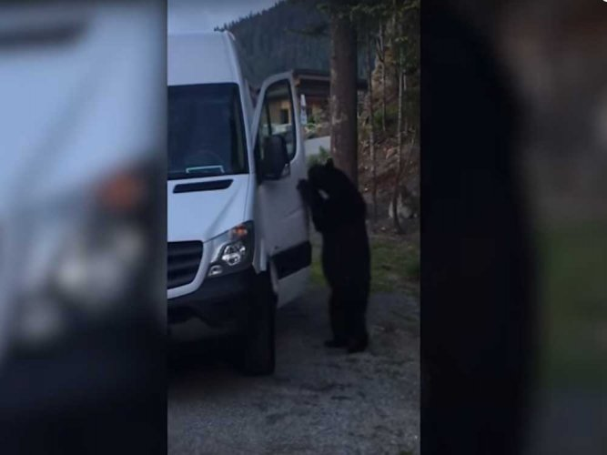Video: Bear breaks into van, attempts to steal food