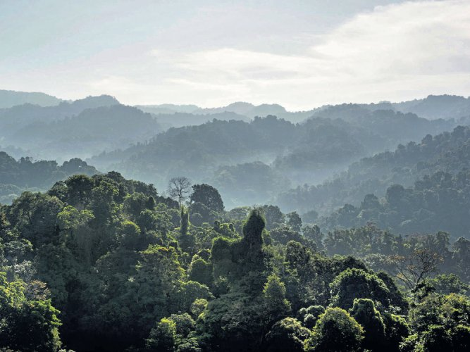 State wants 4.98L ha dropped from deemed forest list