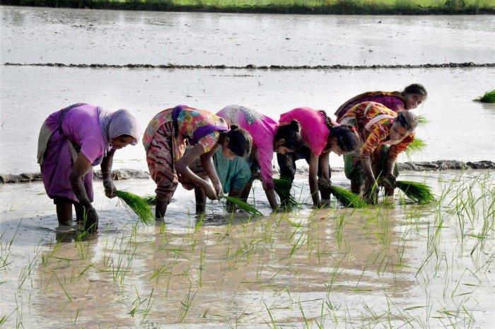 Allies condemn govt's farm policies