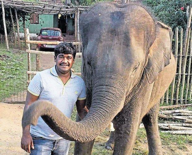 Man killed by elephant Sundar, says BBP; Peta suspects foul play