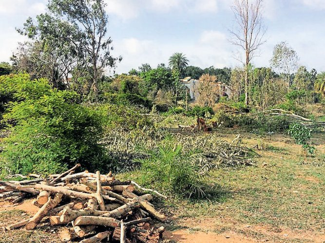 140 trees face axe as Palike plans to build new road