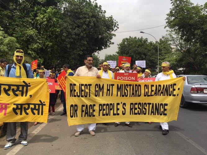GM mustard: Activists step up campaign ahead of SC hearing