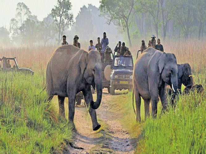 No cameras, mobiles, selfie sticks in safari areas of Bannerghatta
