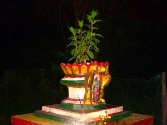 Tulsi as a twinkling totem...