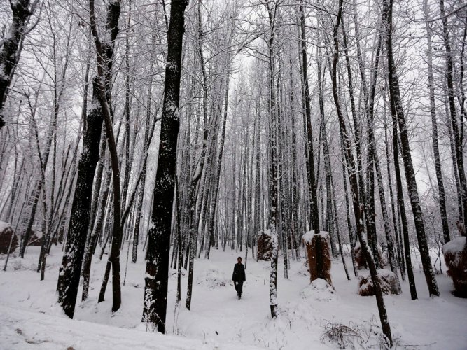 Upper reaches in Kashmir receive season's first snowfall