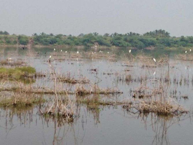 Deepavali will be quiet in 10 villages