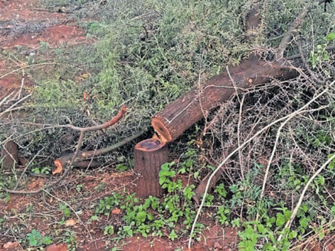 Corporates keen on forest dept. export certification