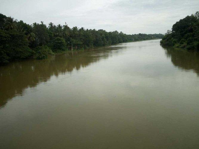 Good showers fill Shimsha river after 12 yrs