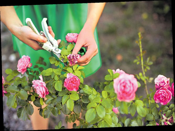 Centre's eyes in sky to boost horticulture output