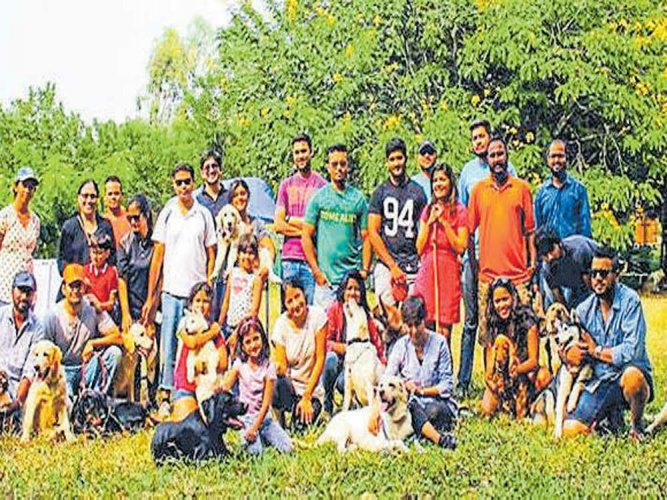 Dog parks set to make Bengaluru the most canine-friendly city