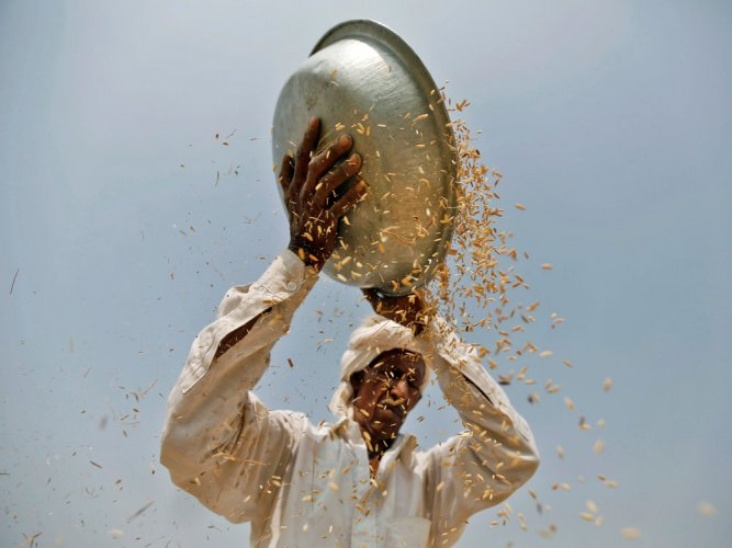 UP minister's cavalcade ruins farmer's standing crop
