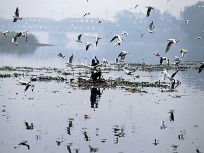Indian rivers teeming with drug resistant bacteria, says report