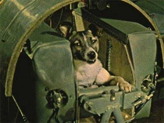 Dog star: Scientist recalls training Laika for space
