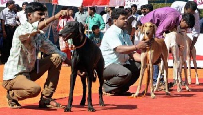 People love dogs more than humans: study