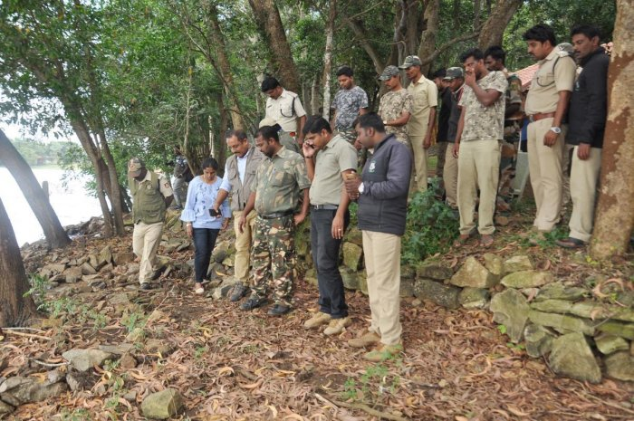 Operation Tiger' launched today to capture big cat spotted