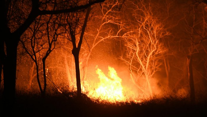 Impact of forest fires