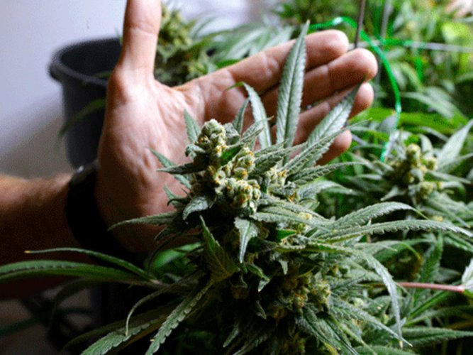 Teens who drink, smoke pot less likely to achieve life goals
